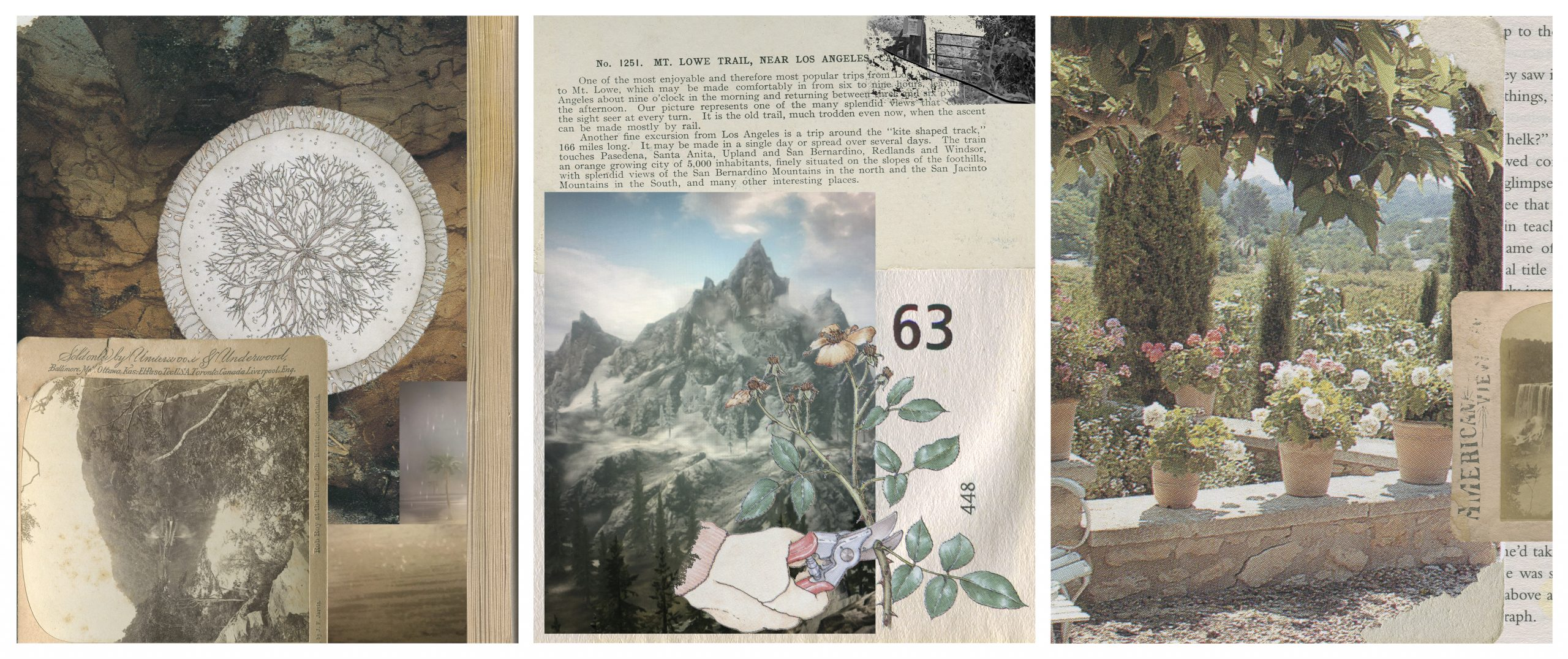 A triptych collage created using appropriated photographic materials. The three sections layer cuttings of vintage nature photographs and illustrations with faded, printed text. A new illustration of a hand cutting the stem of a flower with a pair of secateurs can be seen in the middle section.